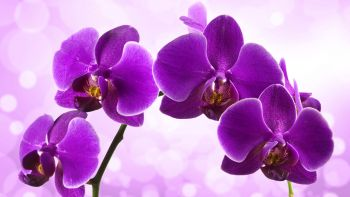 Orchid Plants Ukraine 2