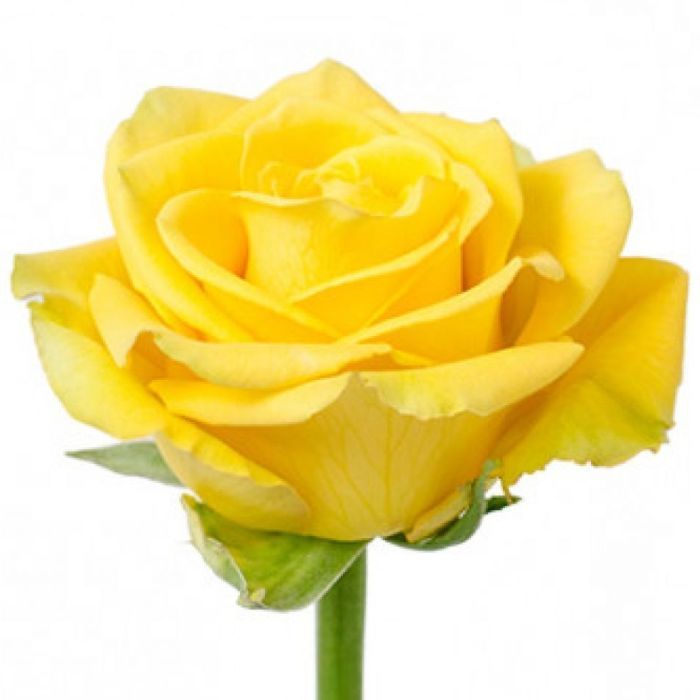 Order Yellow roses